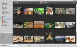 11 Best Picasa Alternatives for Windows and Mac - SwitchGeek